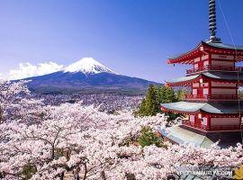 Vé máy bay đi Nhật Bản bao nhiêu tiền?